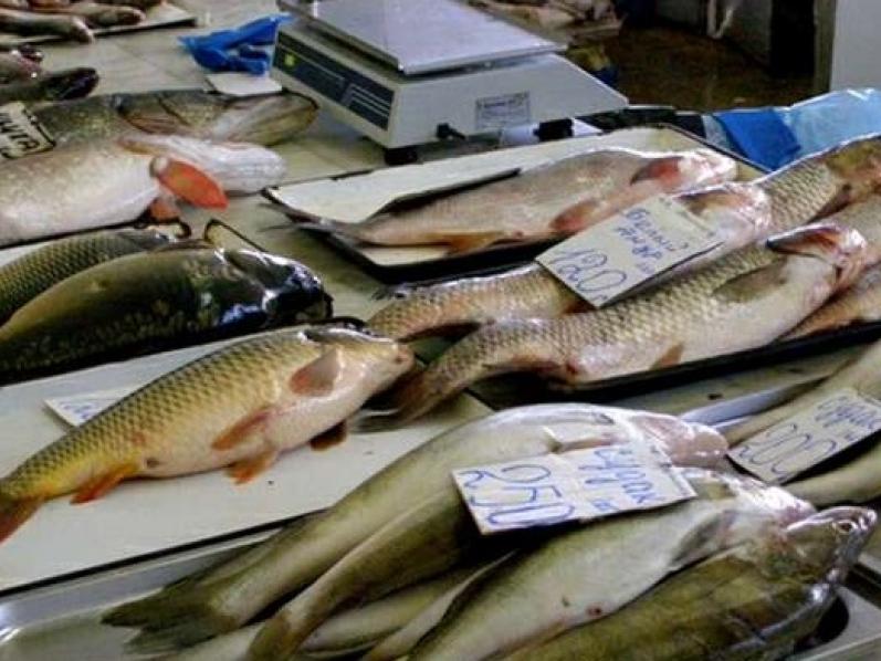Рыба свежемороженая для переработки и столовые сорта