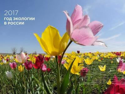 Второй фестиваль тюльпанов пройдет 29-30 апреля