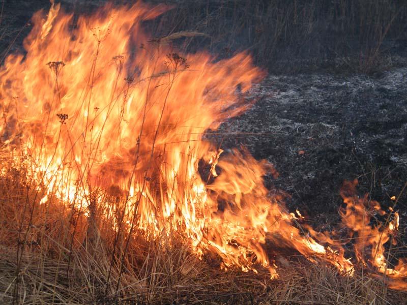 Картинка сухая трава горит