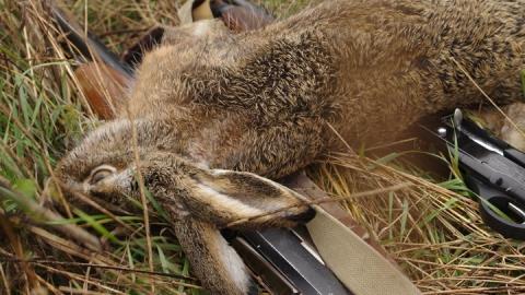 кроссовки когда разрешена охота на зайца 2017 получения вычета через