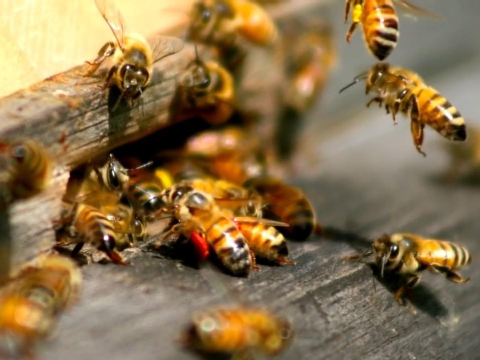 пчелы заработок в интернете