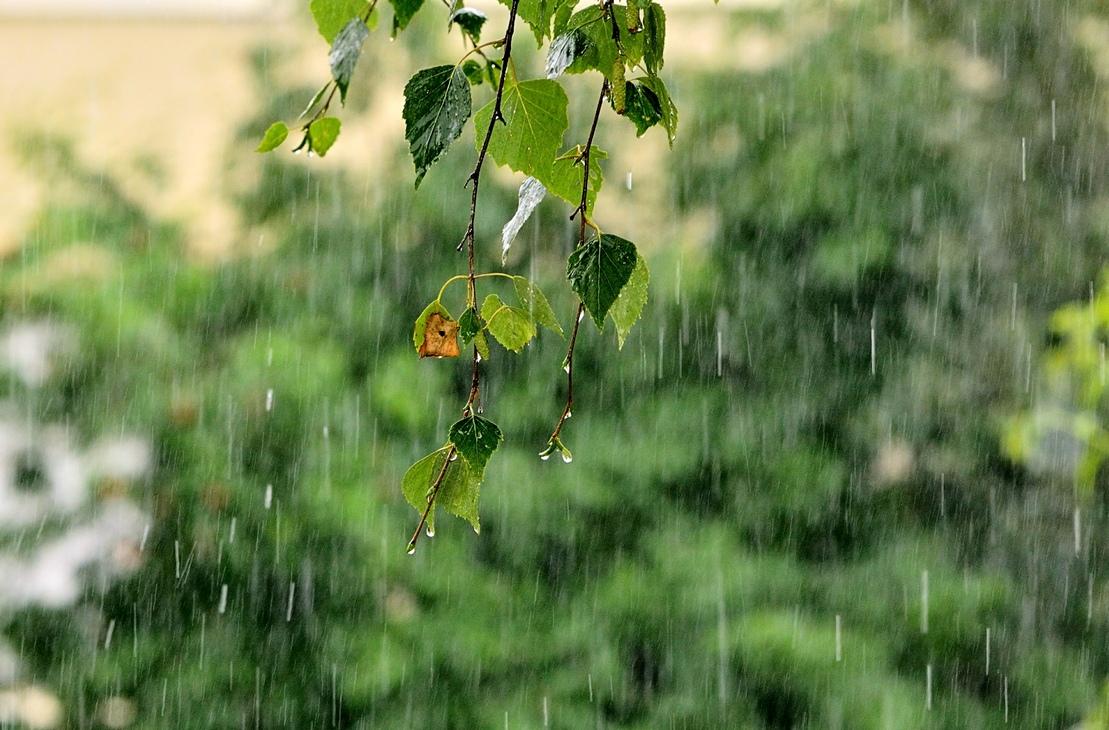 картинки на телефон лето дождь якобы