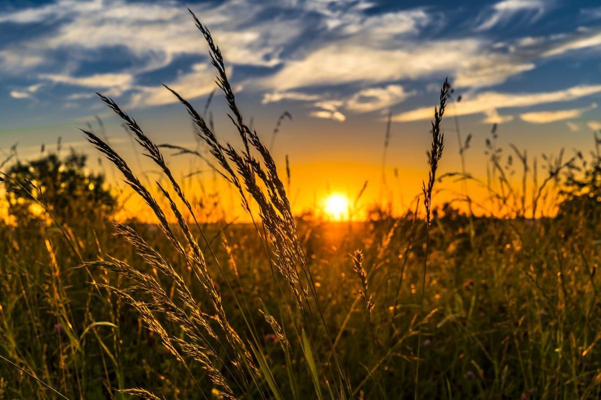GISMETEO: Погода в Светлом на 10 дней, прогноз погоды ...